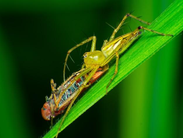 Les araignées mangent des mouches, araignées, chasseurs, animaux dangereux, insectes.