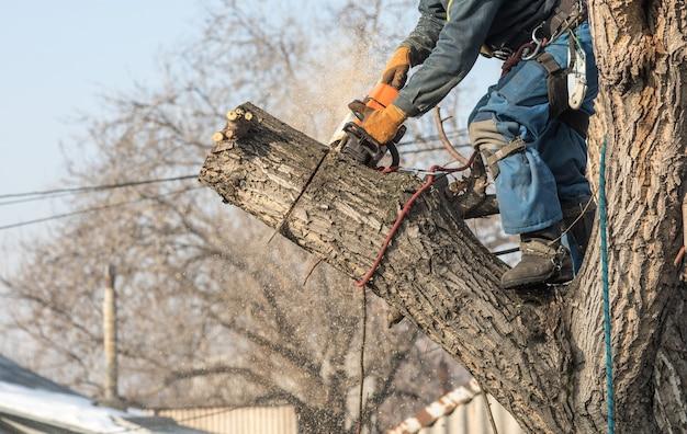 L'arboriculteur coupe des branches avec une tronçonneuse sur un arbre