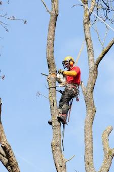 Un arboriste coupant un arbre avec une scie à chaîne