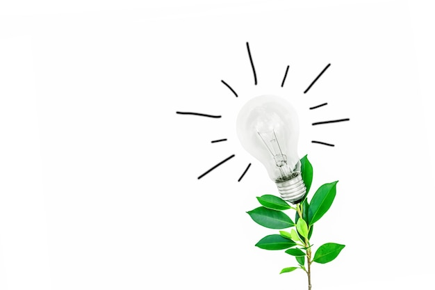 Arbre avec des ampoules sur fond blanc concept d'économie d'énergie