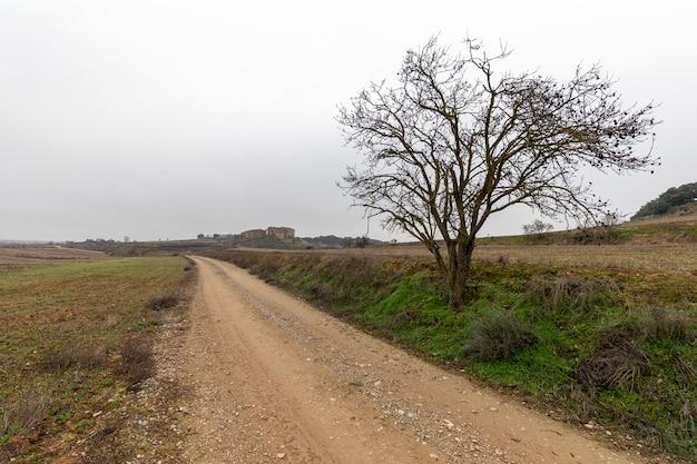 Arbre au bord d'une route rurale