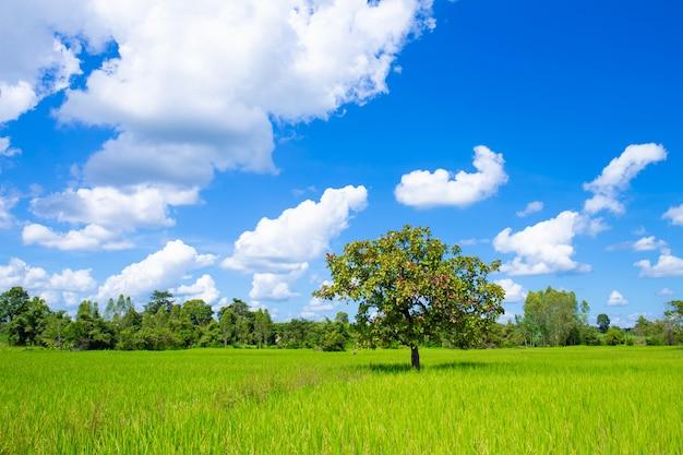 Un arbre au milieu du champ de maïs