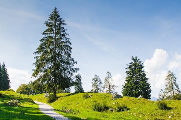 Arbre au milieu d'un pré vert avec fond de ciel bleu