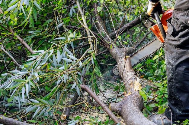 Un arbre au travail jusqu'à un arbre coupe une branche d'arbre à l'aide d'une tronçonneuse sur un arbre tombé après une dure tempête