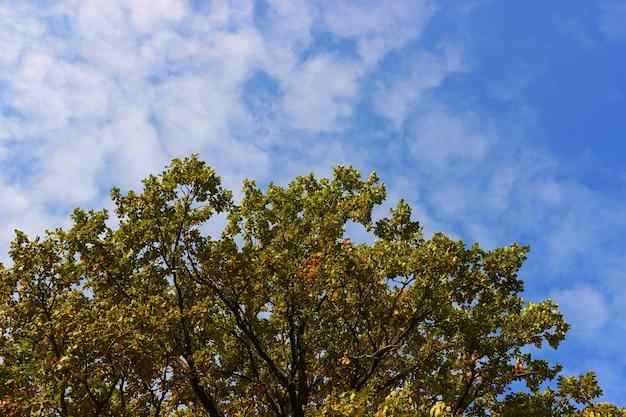Arbre d'automne dans la forêt contre le ciel bleu