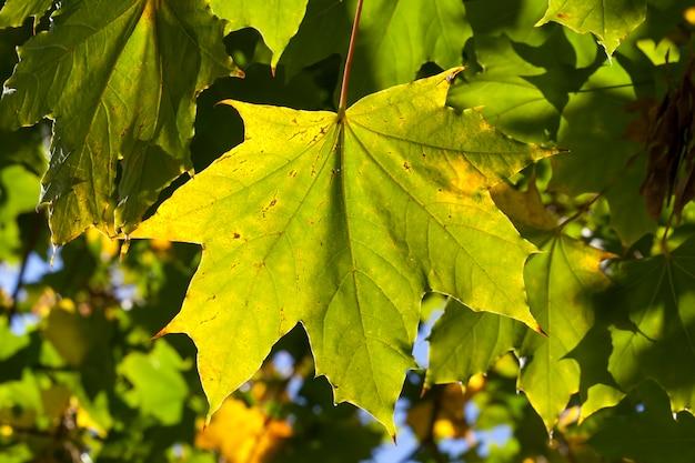 Arbre d'automne avec feuillage