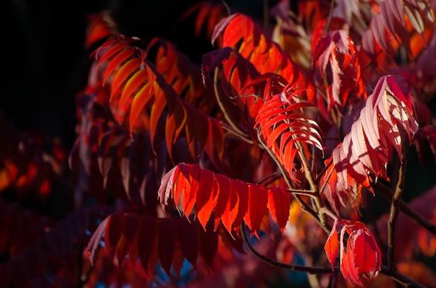 Arbre d'automne avec de grandes feuilles lumineuses.