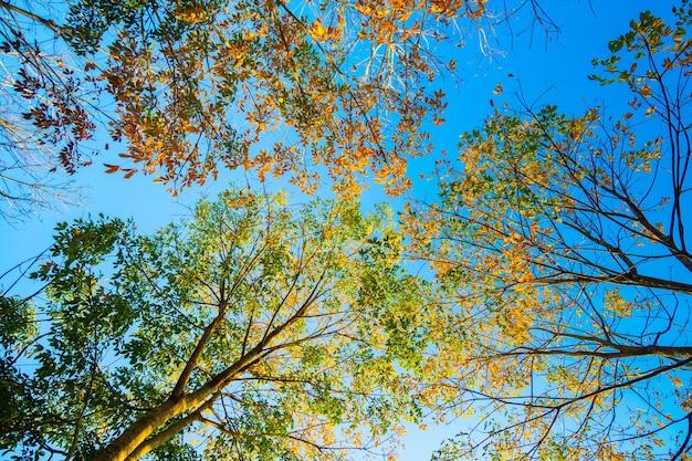 Arbre automne nature au coucher du soleil fond de ciel nature
