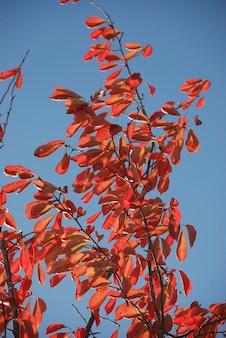Arbre aux couleurs d'automne
