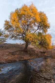Arbre aux feuilles jaunes au bord du ruisseau