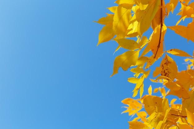 Arbre aux feuilles jaunes au coucher du soleil