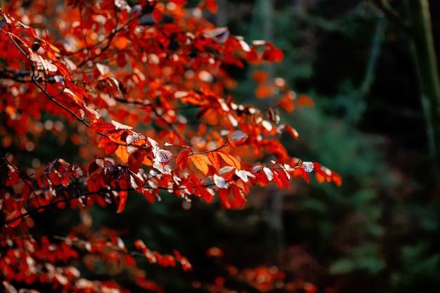 Arbre aux feuilles rouges dans un parc