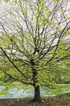 Arbre avec beaucoup de branches par la rivière
