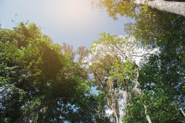 L'arbre a beaucoup de feuilles vertes brillantes.