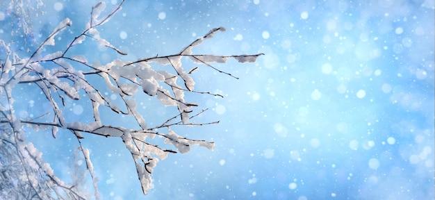 Arbre de branches de bokeh de fond de noël couvert de givre sur la bannière d'hiver de ciel de fond bleu
