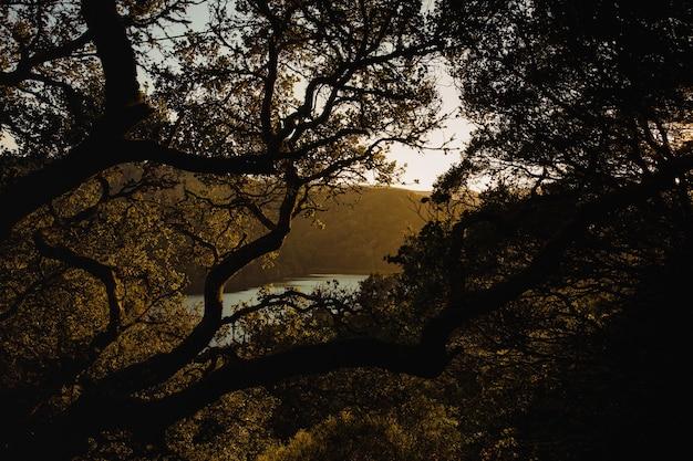 Arbre brun avec des feuilles vertes au coucher du soleil