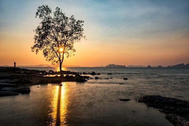 Arbre célèbre sur la mer au coucher du soleil, krabi