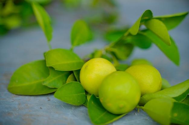 Arbre de citrons verts dans le jardin avec la lumière du jour.