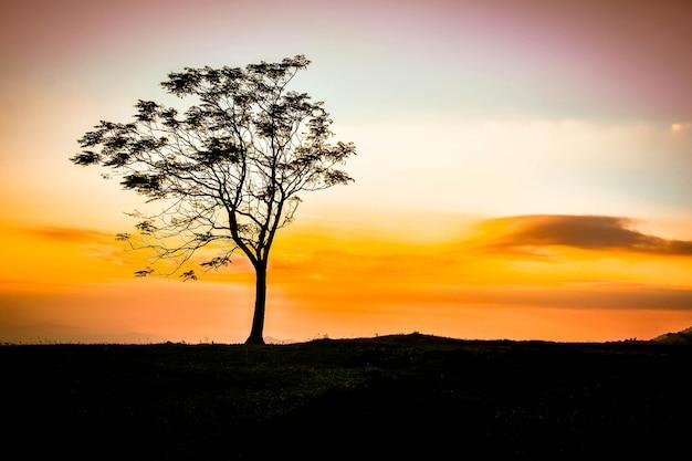 Un arbre sur la colline beau coucher de soleil debout seul