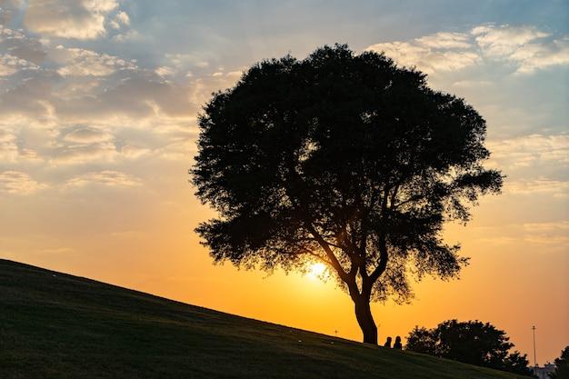 Arbre sur la colline avec coucher de soleil spectaculaire et ciel bleu.