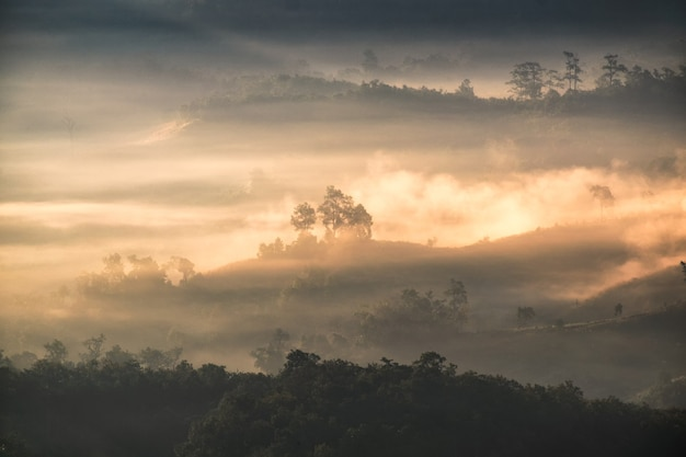 Arbre sur la colline dans le brouillard à l'aube, baan jabo, mae hong son, thaïlande