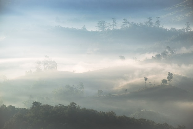 Arbre sur la colline dans le brouillard