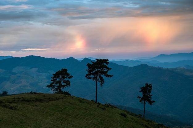 Arbre sur la colline verte avec phénomène de nuage arc-en-ciel le matin