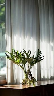 L'arbre à côté de la fenêtre repose sur une table en bois par une journée ensoleillée.