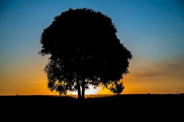 Arbre coucher de soleil noir