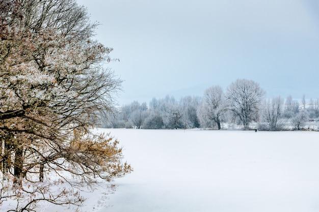 Arbre couvert de neige sur fond de champ et d'arbres en hiver à distance_