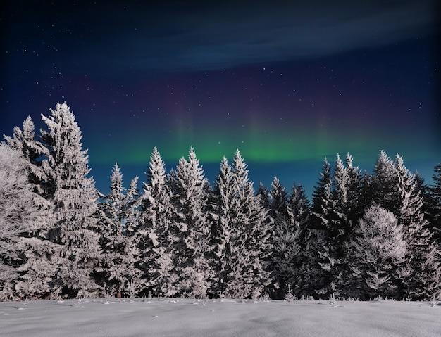 Arbre couvert de neige d'hiver magique. paysage d'hiver. ciel nocturne vibrant avec des étoiles et une nébuleuse et une galaxie. astrophoto du ciel profond