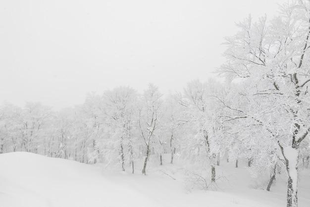 Arbre couvert de neige le jour de la tempête hivernale dans les montagnes de la forêt