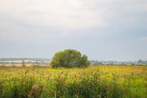 Arbre dans un champ vert