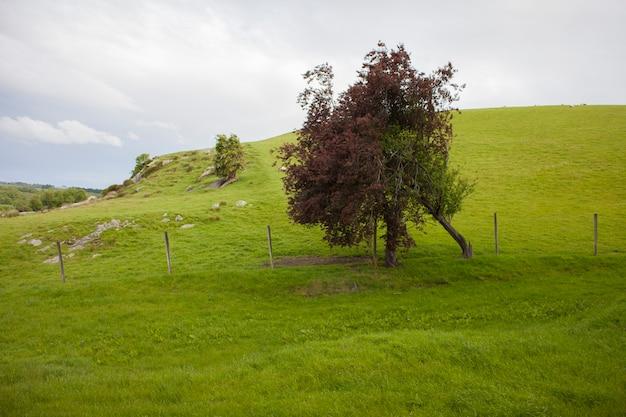 Arbre dans le champ vert