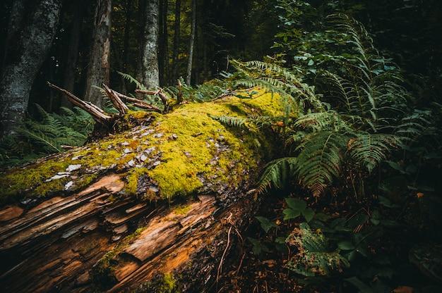 Arbre dans une forêt de mousse