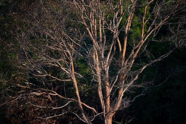 Arbre dans la forêt tropicale