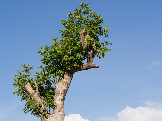 L'arbre dans le parc sur un ciel bleu avec fond de nuage