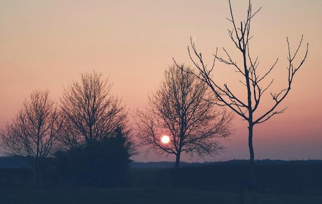 Arbre dans les prés à la campagne au coucher du soleil printemps néerlandais néerlandais