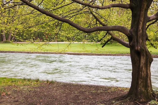 Arbre debout par la rivière