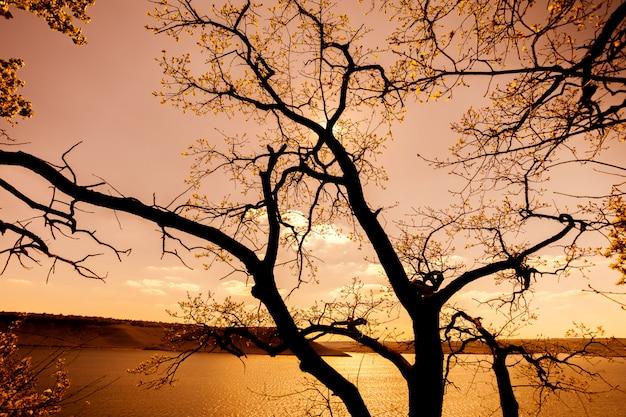 Arbre avec de l'eau au coucher du soleil