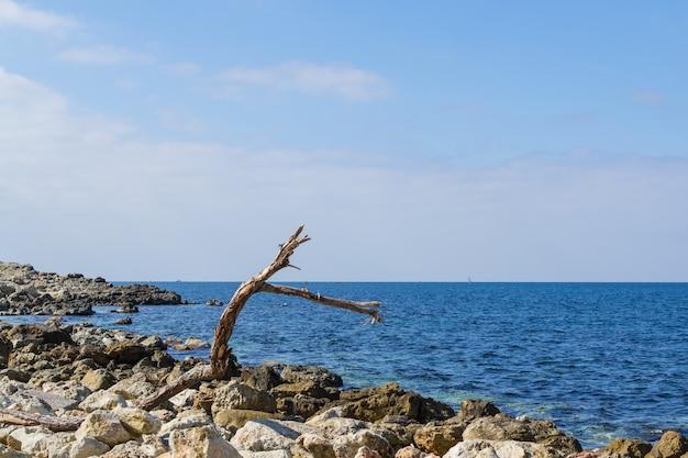 Arbre échoué sur le bord de la mer