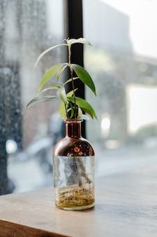 L'arbre est dans une bouteille transparente disposée sur la table en bois.