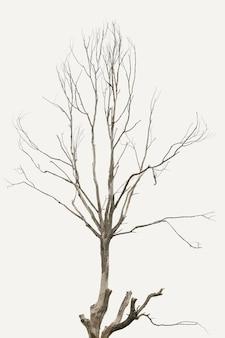L'arbre est sec
