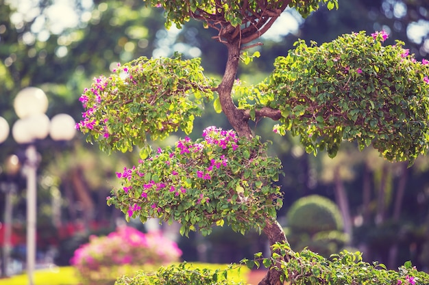 Arbre exotique dans un jardin tropical
