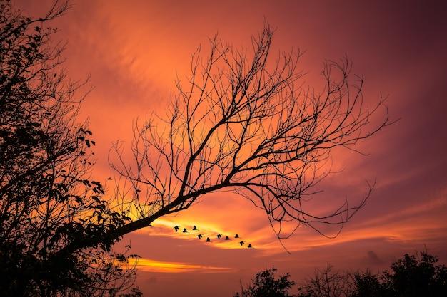 Arbre fané avec fond de lueur du coucher du soleil, l'oiseau rentre du travail.