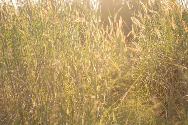 Arbre feuilles bokeh pour fond nature et enregistrer le concept vert, abstrait, doux et flou focus