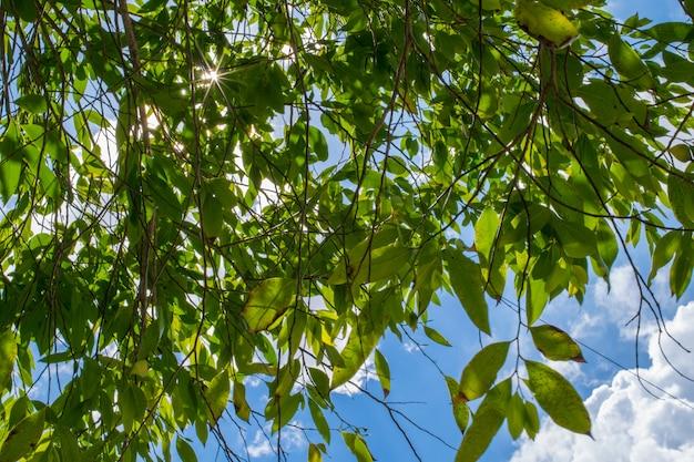Arbre de feuilles vertes sur fond de ciel bleu