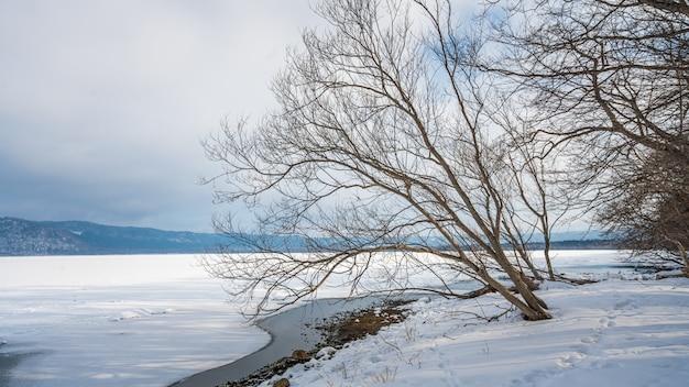 Arbre feuillu avec paysage d'hiver