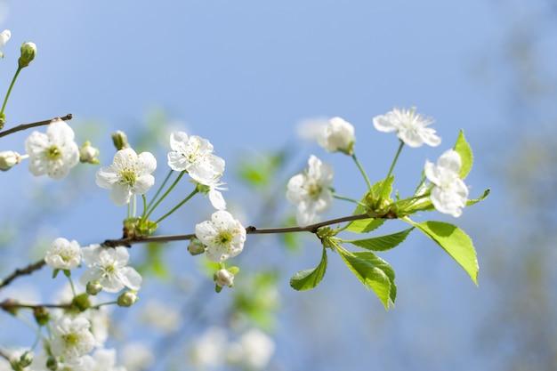 Arbre fleur sur fond naturel