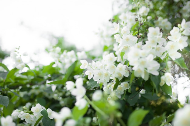 Arbre fleuri sur la nature
